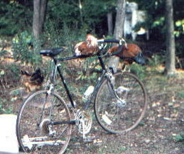 the great bicycling chickens